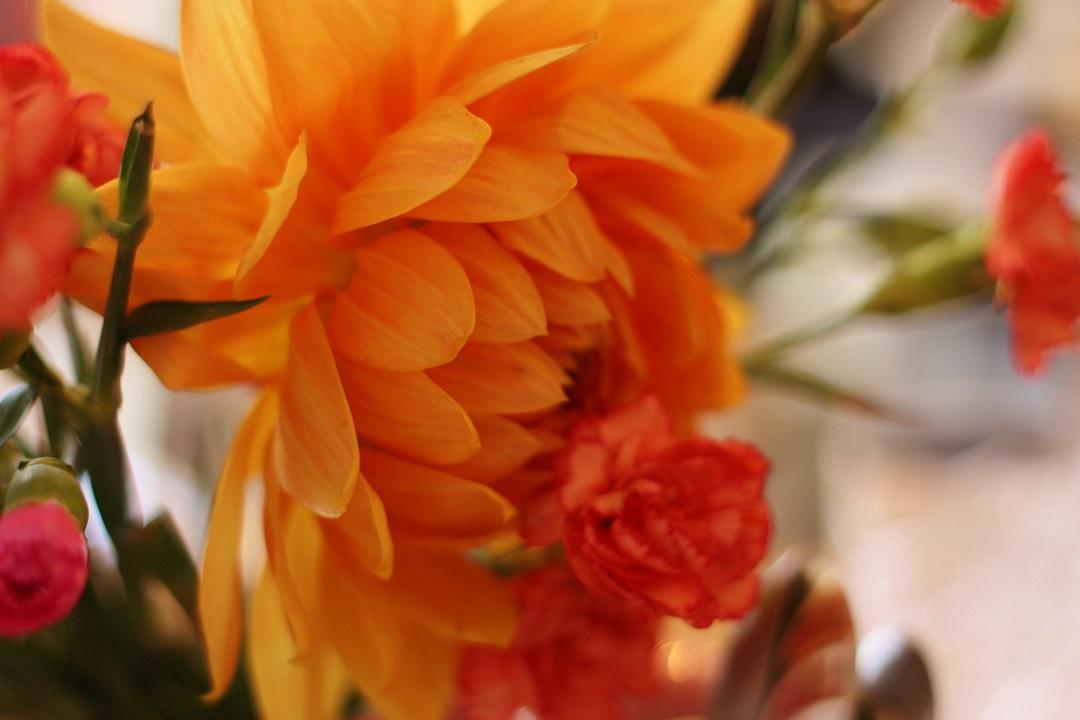 cornish-blogger-meet-up-afternoon-tea-at-bone-china-2