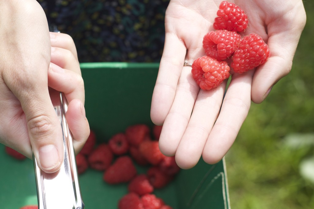 raspberry-haul-1024x683