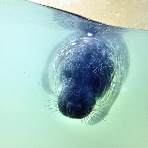 Cornish+Seal+Sanctuary