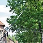 Auschwitz Birkenau 4
