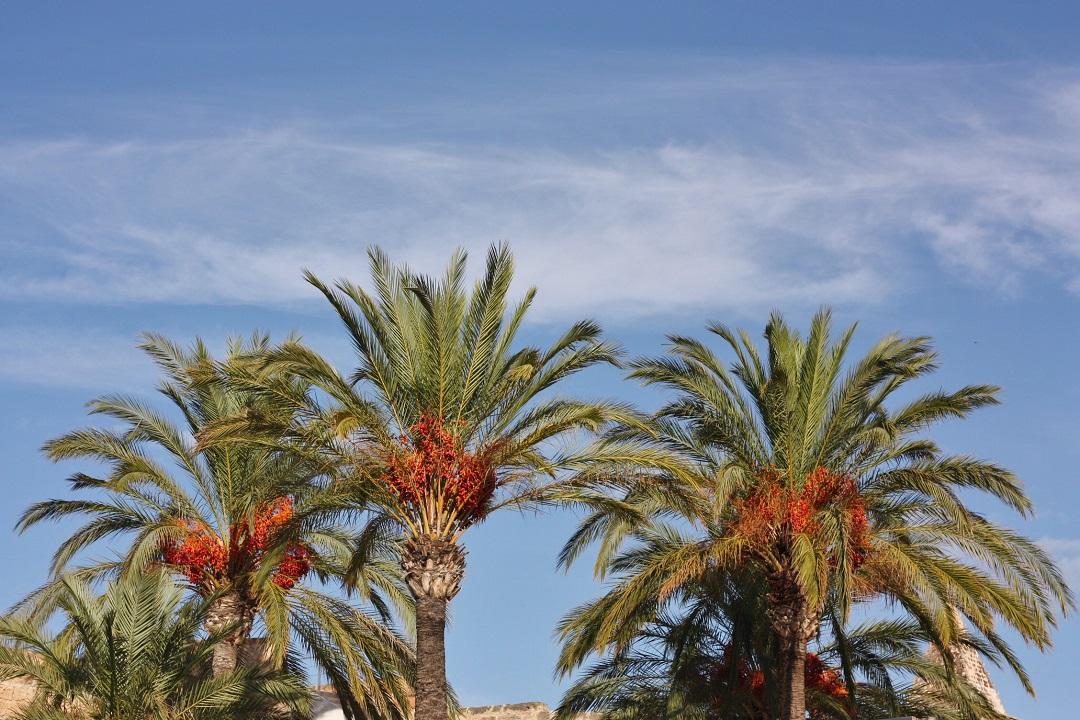 Autumn Adventures in Mallorca 18
