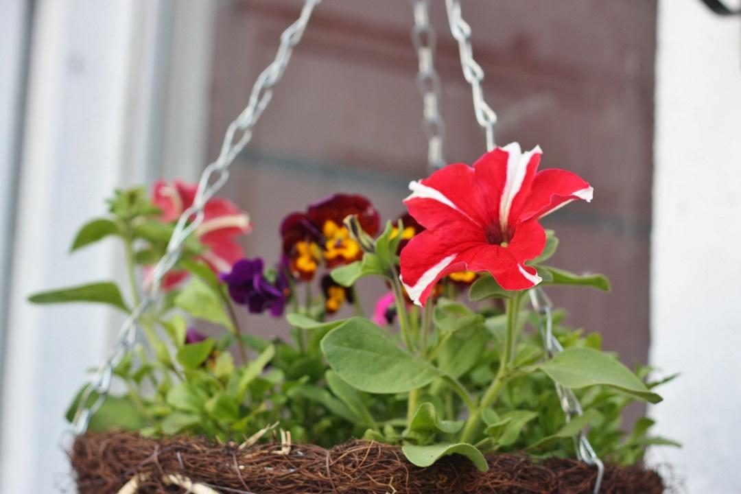DIY The Garden 25