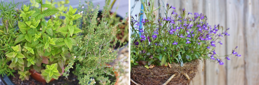 DIY The Garden 30