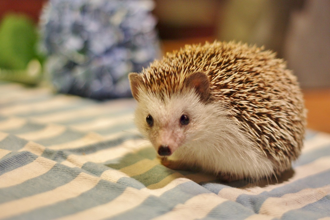 timothy-pricklepin-10