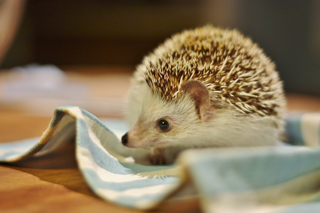 timothy-pricklepin-3