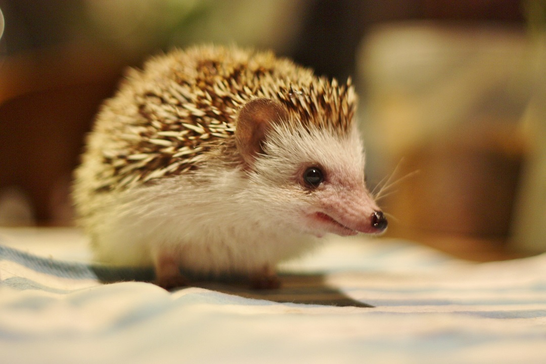 timothy-pricklepin-5
