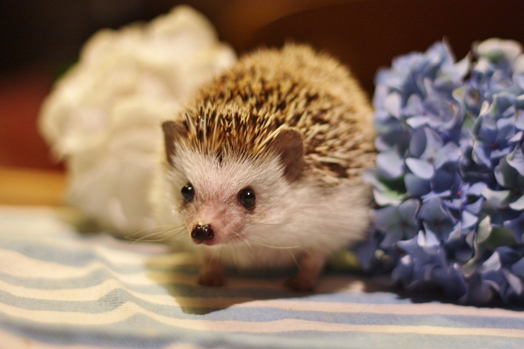 timothy-pricklepin-7