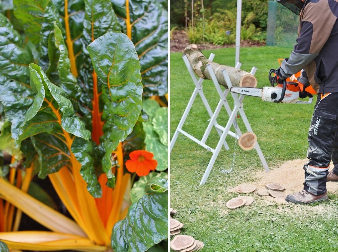 autumn-woodfest-rhs-rosemoor-21