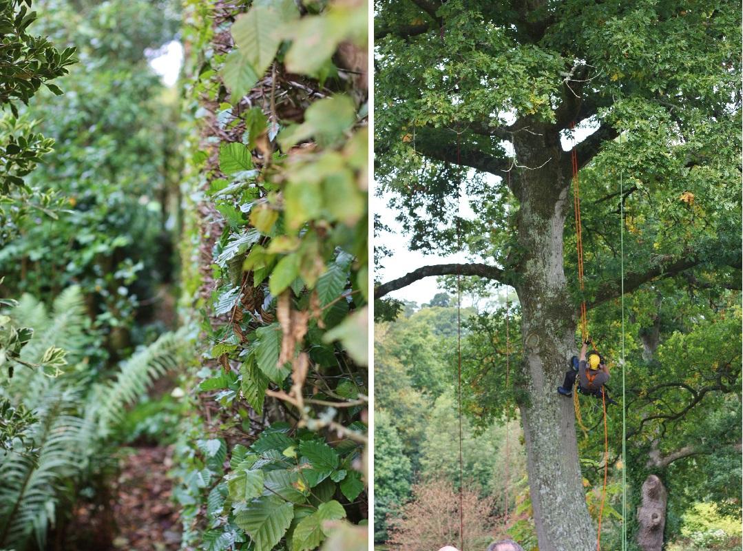 autumn-woodfest-rhs-rosemoor-24