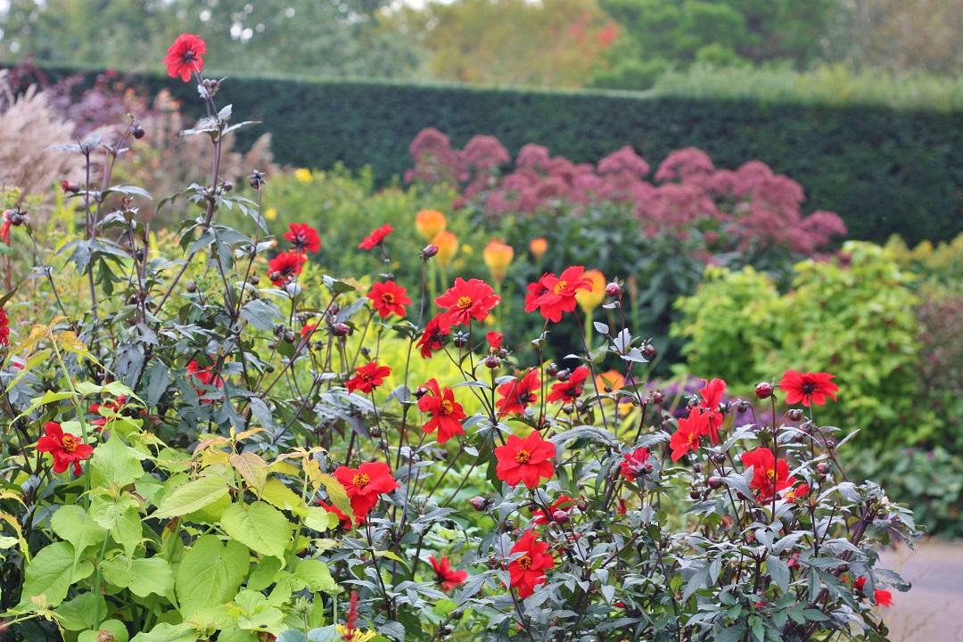 autumn-woodfest-rhs-rosemoor-29