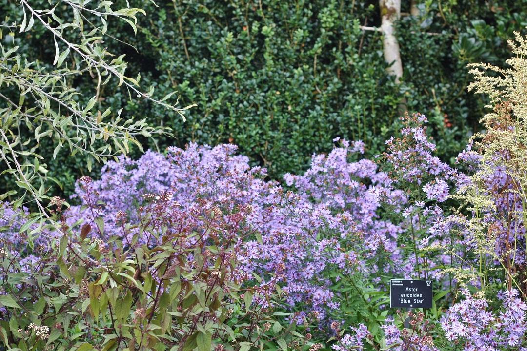 autumn-woodfest-rhs-rosemoor-32