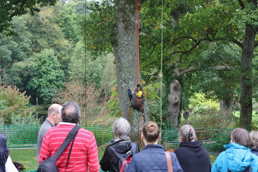 autumn-woodfest-rhs-rosemoor-38