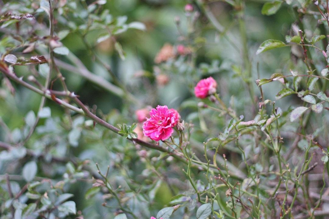 december-garden-10