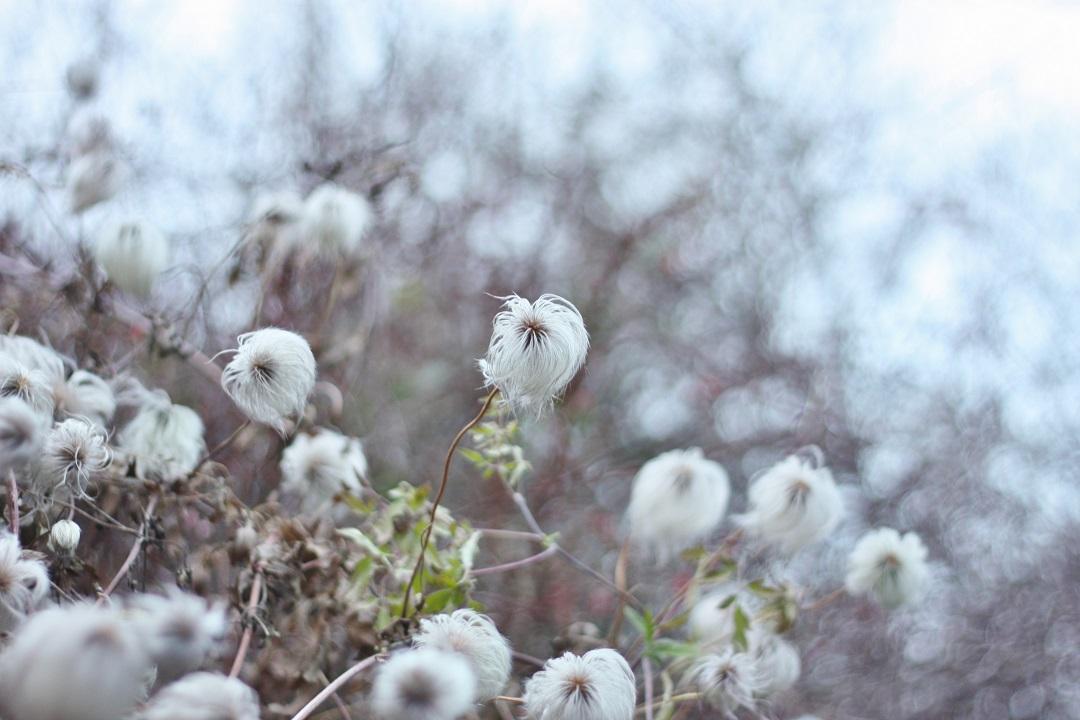 december-garden-13