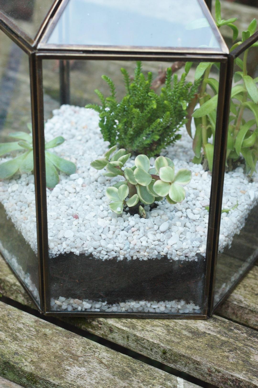 DIY terrarium 10