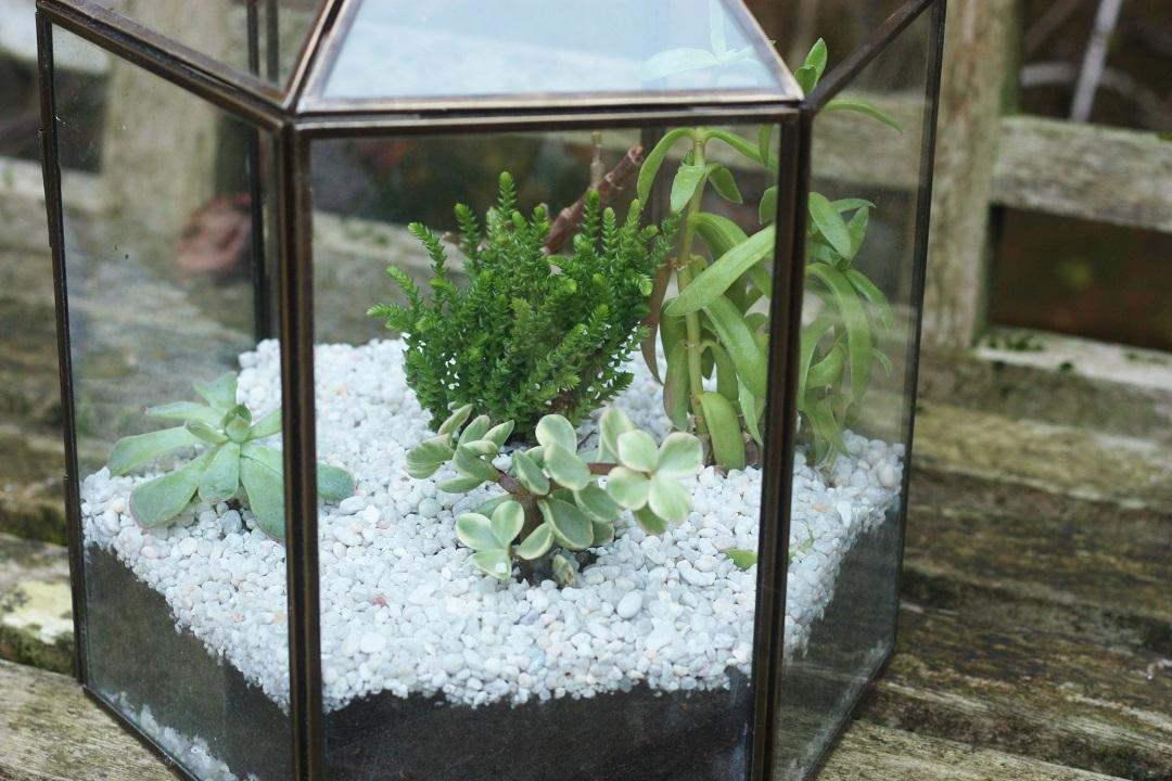 DIY terrarium 11