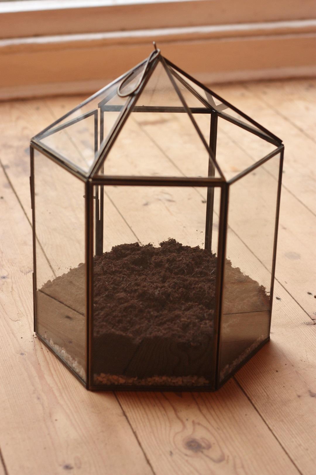 DIY terrarium 2