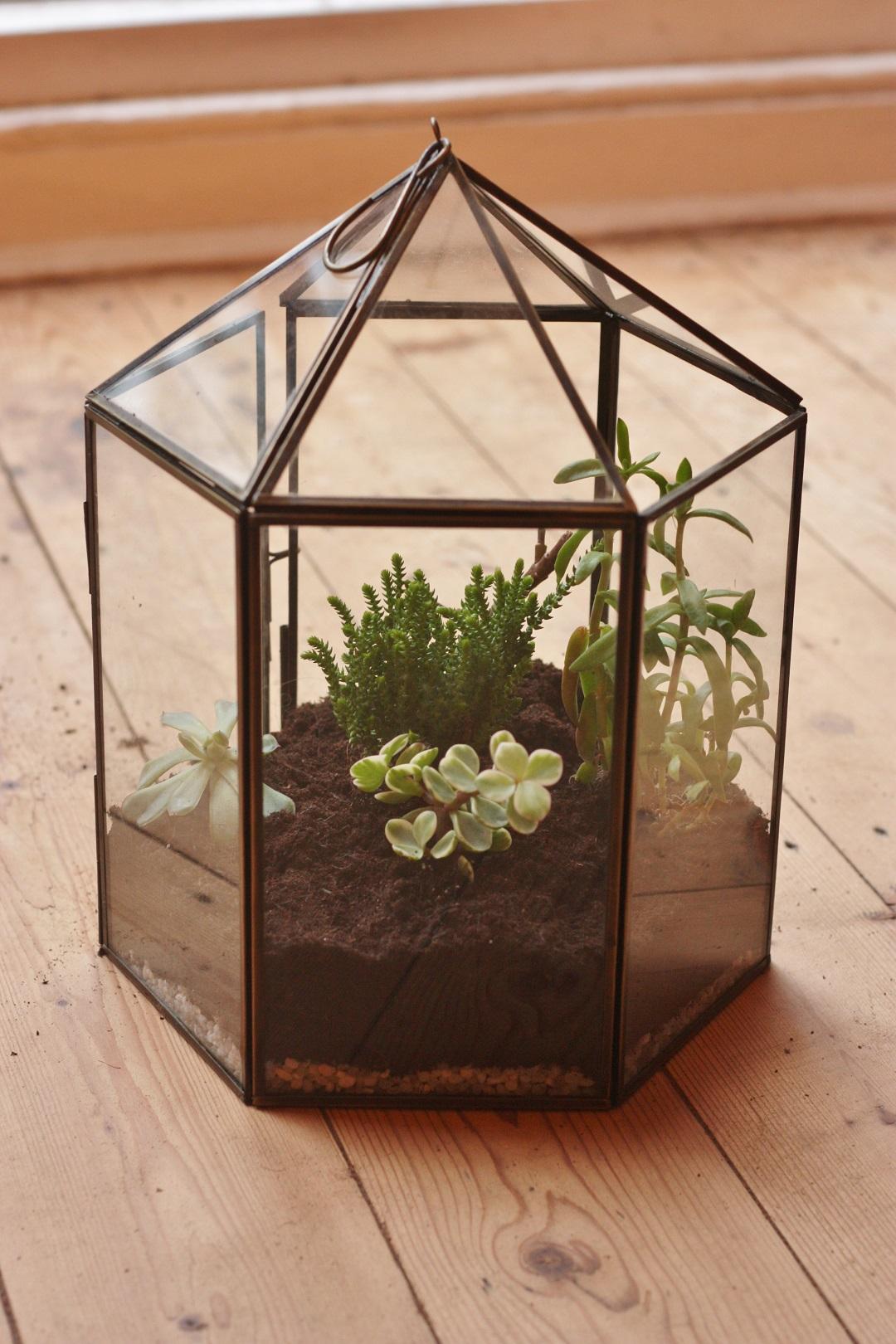 DIY terrarium 7